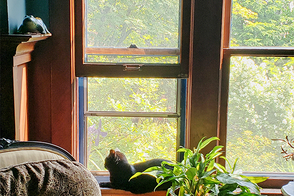 Restored windows add comfort and safety to your family's home.