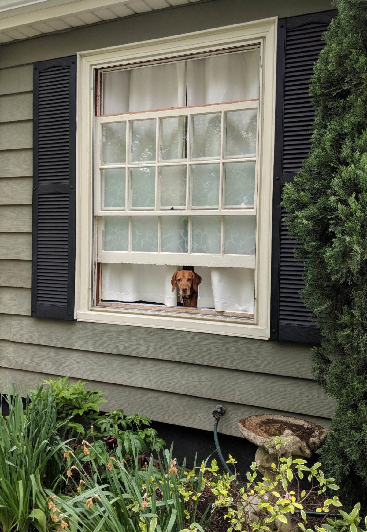 Everyone enjoys a little fresh air.